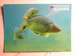 Animaux - Poissons - Carpe - Vissen & Schaaldieren