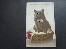 Chat ( 154 )   Kat    Carte Aux Yeux En Verre - Chats
