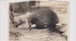 ZOO'S   ANIMAUX ANIMALS ANIMALES SEE CORNERS 16*12CM Fonds Victor FORBIN 1864-1947 - Otros