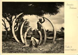 Somalia - Trofeo Di Zanne D Elefant - Somalia