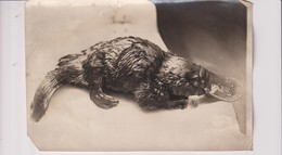 ZOO'S   ANIMAUX ANIMALS ANIMALES SEE CORNERS 16*12CM Fonds Victor FORBIN 1864-1947 - Fotos