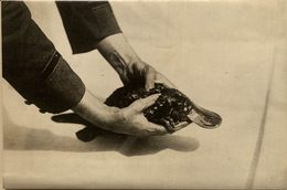 ANIMAUX ANIMALS ANIMALES 16*12CM Fonds Victor FORBIN 1864-1947 - Otros