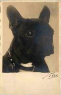 Hund - Cani