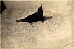 ZOO ANIMAUX ANIMALS ANIMALES 16*12CM Fonds Victor FORBIN 1864-1947 - Photos
