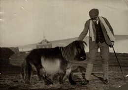 SHETLAND PONY ORKNEY ISLANDS  ANIMAUX ANIMALS ANIMALES 16*12CM Fonds Victor FORBIN 1864-1947 - Otros