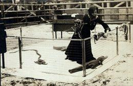 WILD AUSTRALIA CRYSTAL PALACE LONDON CROCODILE SNAKES  ANIMAUX ANIMALS ANIMALES 21*14CM Fonds Victor FORBIN 1864-1947 - Otros