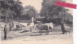 23-BONNAT (Creuse) - VACHES à L'ABREUVOIR- Edit. J. Bardet- Animée- - Francia