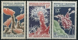 NEW CALEDONIA 1964 Corals Marine Life Flora Harlequin Shrimp Animals Fauna MNH - Neukaledonien