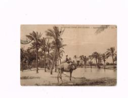 """Egyptian Types And Scenes.Egyptian Landscape.Expédié De """"Cairo-Alexandria"""" à Gand (Belgique) - Egypt"""