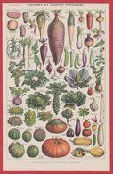 Légumes Et Plantes Potagères. Légume Et Plante Potagère. Illustration Adolphe Millot. Recto-verso. Larousse 1931. - Historische Documenten