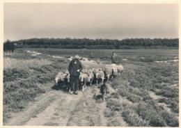 Nederland - 1946 - Landschapserie 2 - Vierhouten Schapen Op De Heide - Foto-briefkaart G287b Ongebruikt - Ganzsachen