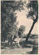 Nederland - 1946 - Landschapserie 6 - Haaren (NB) Landelijke Weg - Foto-briefkaart G287f Ongebruikt - Postal Stationery