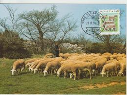 Suisse Carte Maximum 1995 Mouton 1492 - Maximum Cards