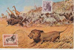 Afrique Du Sud Carte Maximum 1954 Zèbre Et Lion 204 Et 208 - South Africa (...-1961)