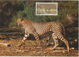 Afrique Du Sud Carte Maximum 1976 Guépard 405 - Brieven En Documenten