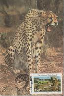 Bophuthatswana Carte Maximum 1988 Guépard 205 - Bophuthatswana
