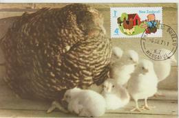 Nouvelle Zélande Carte Maximum 1975 Poule Et Poussins 640 - Covers & Documents