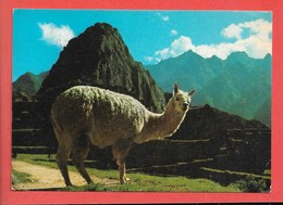 Perù - Viaggiata - Perù