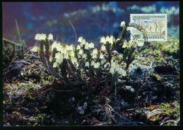 Mk Greenland Maximum Card 1990 MiNr 207 | Flowers, Arctic White Heather - Cartes-Maximum (CM)