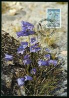 Mk Greenland Maximum Card 1990 MiNr 205 | Flowers, Bellflower - Cartes-Maximum (CM)