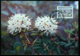 Mk Greenland Maximum Card 1990 MiNr 206 | Flowers, Labrador Tea - Cartes-Maximum (CM)