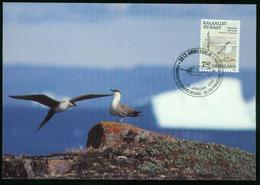 Mk Greenland Maximum Card 1990 MiNr 200 | Birds, Long-tailed Skuas - Cartes-Maximum (CM)