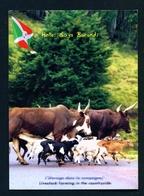 BURUNDI - Livestock Farming Unused Postcard As Scans - Burundi