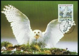 Mk Greenland Maximum Card 1999 MiNr 332 Y | WWF, Endangered Species, The Snowy Owl - Cartes-Maximum (CM)
