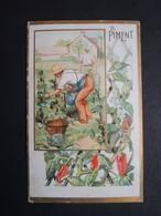 CHROMO. Chocolat  POULAIN.  Plantes  Utiles.  Le  PIMENT. - Poulain