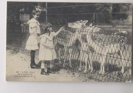 LYON - 1905 - Parc Zoologique - Parc De La Tête D'Or - DAIMS - ZOO - Animée - Lyon