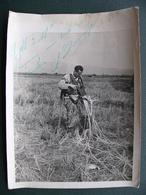 Photo D'un Parachutiste Charles Loutin ? Dédicacée Service Presse Information - Aviation