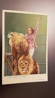 China. Perking Circus. Lion Trainer - Circus