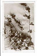 CPA-Carte Postale-Royaume Uni- Flowers-Bond Of Love-1906  VM10169 - Flowers