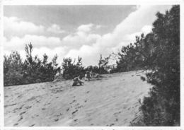 Belgium Maria Middelares Lommel Bos En Duin Desert Beach Postcard - Other