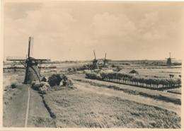 Nederland - 1946 - Molen Serie 5 - Alblasserwaard Bovenkruiers - Foto-briefkaart G285e Ongebruikt - Material Postal