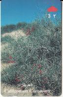 OMAN(GPT) - Calligonum Comosum, CN : 44OMNQ/B(normal 0), 03/99, Used - Oman