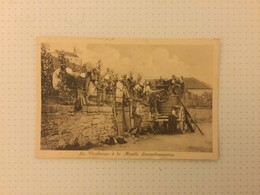 GREVENMACHER  CAVES BERNARD - MASSARD  LES  VENDANGES A LA MOSELLE LUXEMBOURGEOISE - Postcards