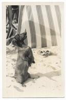 """Carte Photo Teckel """" Sigi """"à La Plage - Hunde"""