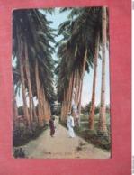 Palm Lane Jolo  Philippines   Ref 3764 - Philippines