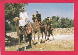 Modern Post Card Of Kamelreiter,Sudan Camel Rider,L68. - Sudan