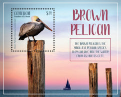 Canouan, Grenadines Of St.Vincent 2019 Fauna Brown Pelican I201903 - St.Vincent & Grenadines