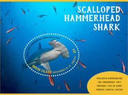 Union Island  Grenadines Of St.Vincent 2019  Scalloped Hammerhead Shark  I201903 - St.Vincent & Grenadines