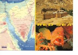 EGYPTE ?? MER ROUGE Et CARTE Du SINAÏ / CPM Grand Format  Voyagée 2007 ? Poisson Magnifique !! - Egypt