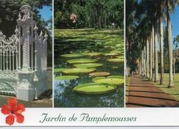 Ile Maurice Mauritius Le Jardin De Pamplemousses - Mauritius
