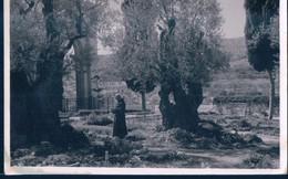 POSTAL GARDEN OF GETHSEMANE - INTERIOR - ISRAEL - Israel