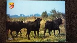 CPSM EN CAMARGUE TAUREAUX CAMARGUAIS ED SL 1986 BLASON - Bull