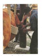 Bujaleuf--1993 Paul Dutreix  Ferre Une Vache -(D.4270) - France
