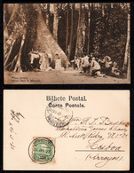 1907 - Portugal Guinea Bissau Postcard Circulated From S. Tomé To Lisbon. Outdoor Mass. Jungle. Trees. 10r Stamp. - Guinea-Bissau