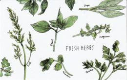 Postcard - Art - Wendy MacNaughton - Fresh Herbs - New - Postcards