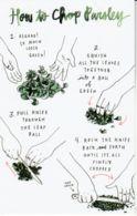 Postcard - Art - Wendy MacNaughton - How To Chop Parsley - New - Postcards